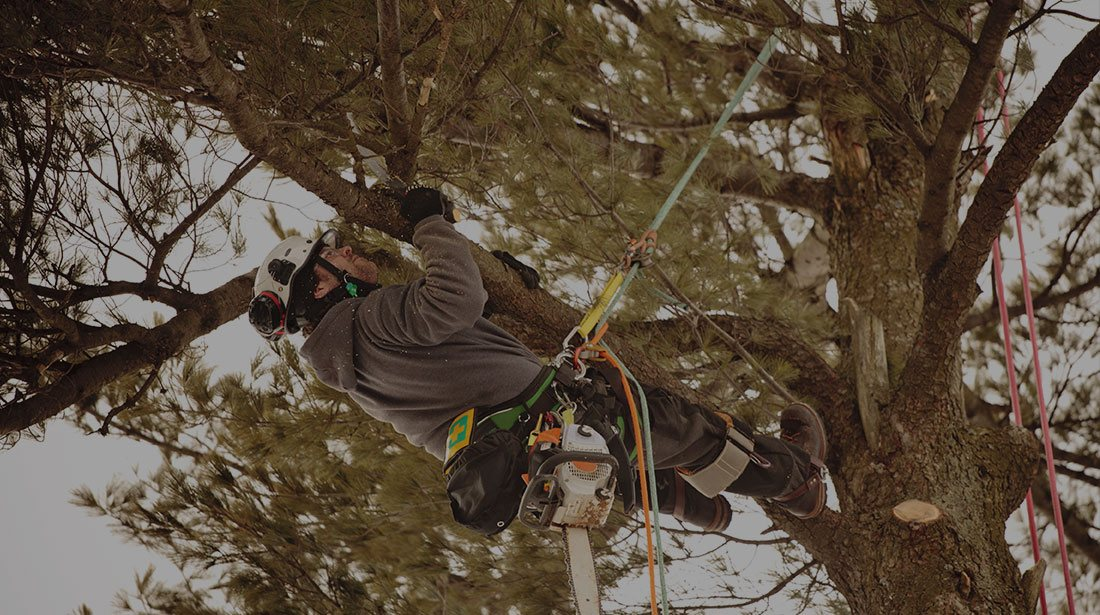 Limbwalkers Tree Service: Emergency tree removal in Red Water, Ashdown, AK and New Boston