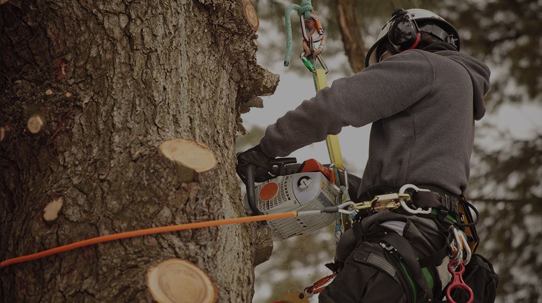 Limbwalkers Tree Service: Stump and tree removal in Texarcana, Ashdown, AK and New Boston