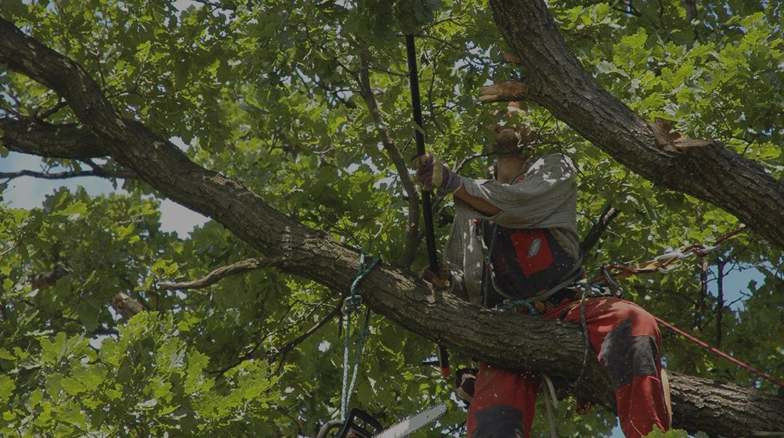 Limbwalkers Tree Service: Tree cabling and bracing in Texarcana, Ashdown, AK and New Boston
