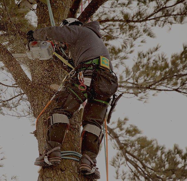 Limbwalkers Tree Service: Tree health in Red Water, Ashdown, AR and New Boston