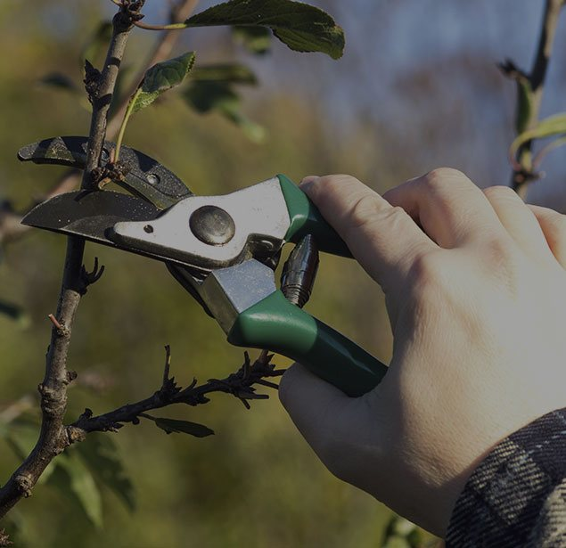 Limbwalkers Tree Service: Tree pruning in Texarcana, Ashdown, AK and New Boston
